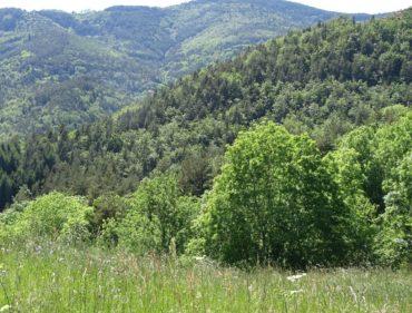 paysage-proche-du-rucher-au-printemps