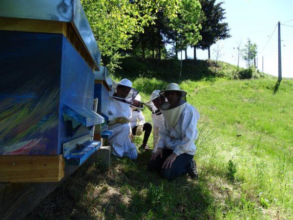 formation-apiculture-observation-au-trou-de-vol