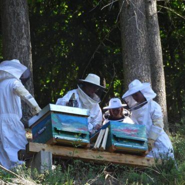 formation-apiculture-ouverture-de-la-ruche