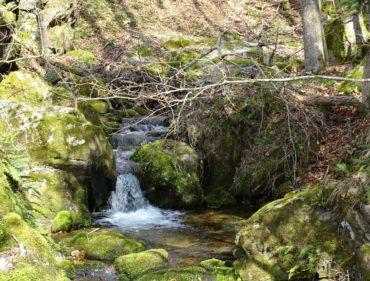 riviere-pres-du-rucher