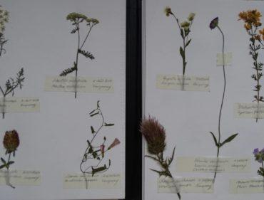 herbier-noir-pollen