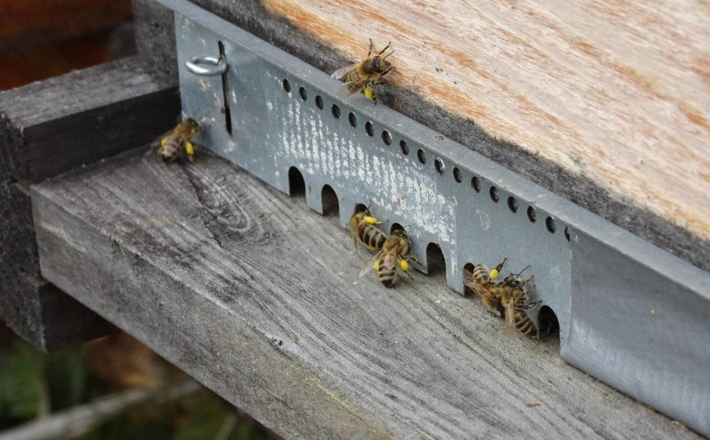 premiers-pollens