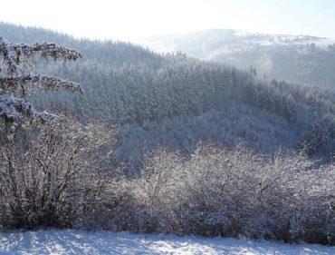 paysage-fevrier-noir-pollen