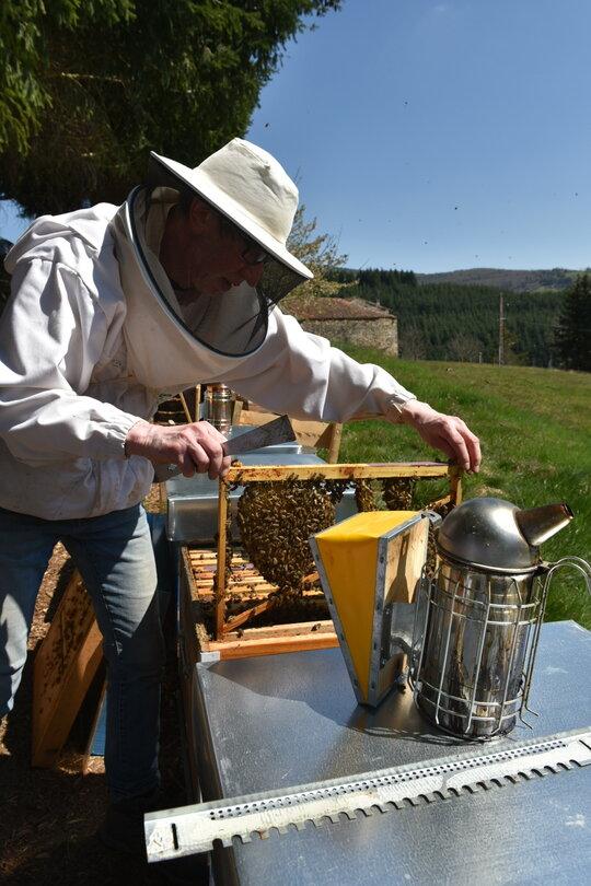 formation-apiculteur